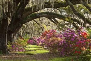 Charleston Istock_15x10cm